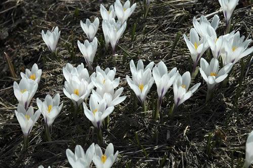 fiori_novembre2009